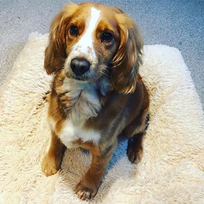 Pupsters : Dog grooming in Totnes - 07498 759988
